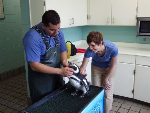 Leslye interacting with a Megellanic penguin